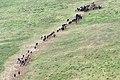Ngorongoro 2012 05 30 2348 (7500936478).jpg