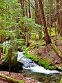 North Cascades National Park (9292795832).jpg