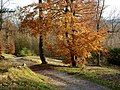 North Downs Way in autumn - geograph.org.uk - 1585991.jpg