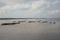 OBangui river (5229116652).jpg
