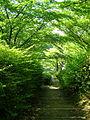 Oike-Park08.jpg