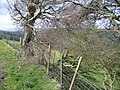 Old Hedge Line near Ty-isaf - geograph.org.uk - 364063.jpg