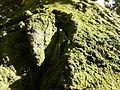 Old green grunge tree bark.jpg
