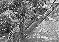Ontginning, zaaien en oogsten gewassen, kassen, arbeiders, Lier De, Bestanddeelnr 160-0268.jpg