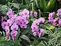 Orchid0001.jpg