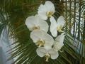 Orquidea011.png