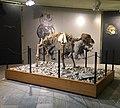 Orso Speleo - Museo di Archeologia e Paleontologia Carlo Conti - Borgosesia.jpg
