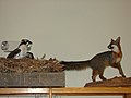 Osprey & Fox Display (6330222601).jpg