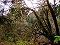 Oswald West State Park (8238601010).jpg
