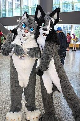 Furrys 9 questions