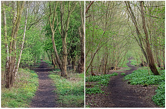 Otley and Ilkley Joint Railway - A footpath lined with trees marks the former railway route to the west of Otley, between what were the old Milnerwood and Burley Junctions