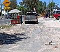 Otospermophilus variegatus in urban area, Mexico.jpg