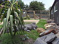 Outdoor Alligator Pen.JPG