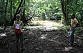 Overbridge rain forest (2719407681).jpg