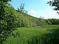 Overgrown Pond - geograph.org.uk - 464232.jpg