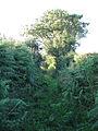Overgrown footpath - geograph.org.uk - 1422662.jpg