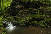 Přírodní rezervace Kavinský potok (06).jpg
