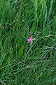 Přírodní rezervace Zubří 80.jpg