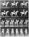 PSM V83 D520 Photo frames of a walking horse.png