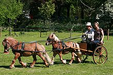 two light brown ponies pulling a small cart, one hitched in front of the other