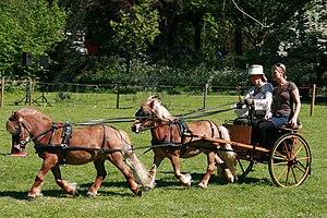 Tandem - Ponies driving in tandem