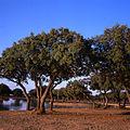 Panoramica Dehesa de Los Llanos 1.JPG
