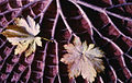 Paolo Monti - Serie fotografica (Verbania, 1962) - BEIC 6334792.jpg