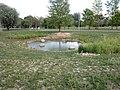 Park Rataje, staw-siedlisko ropuchy zielonej.jpg