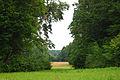 Park w białowieskim parku narodowym.jpg