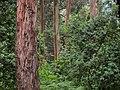 Parque Fundação Serralves woods (5736245480).jpg