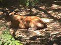 Parque Zoologico de Caricuao 2000 054.JPG