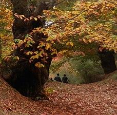 Paseando entre castaños SHINRIN YOKU.jpg