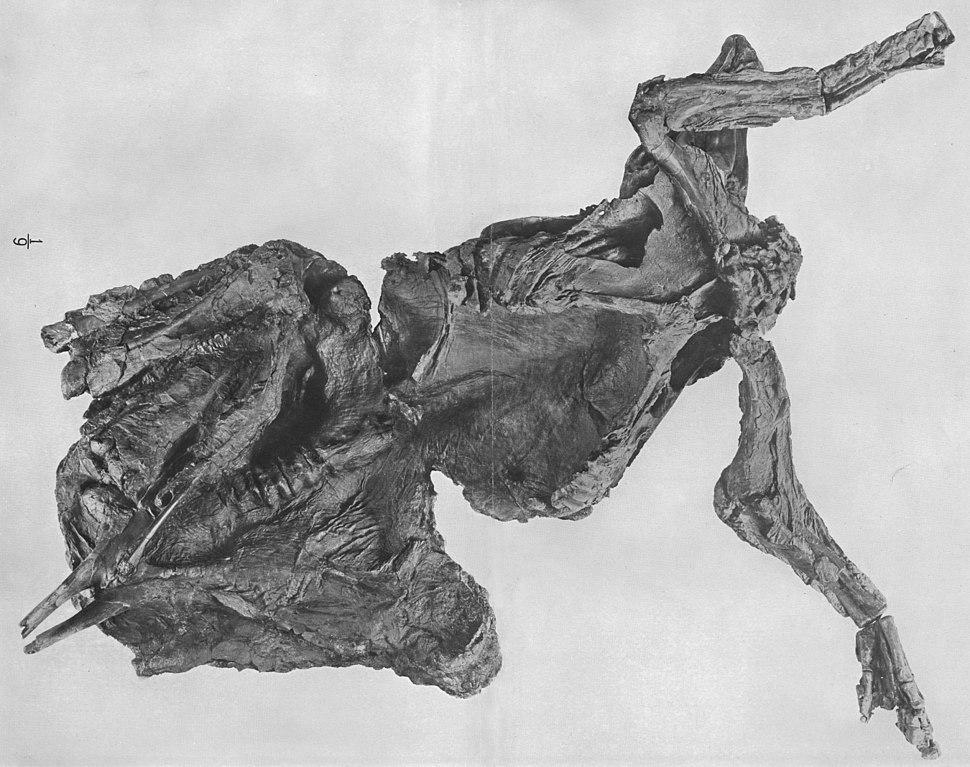 Pasta - mummified trachodon - AmMusNatHist