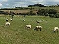 Pasture, Eastbury - geograph.org.uk - 230186.jpg