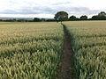 Path to Risley Lodge Farm - geograph.org.uk - 1397295.jpg