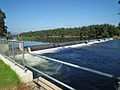 Penrith Weir - Nepean River - Penrith NSW (5554689518).jpg