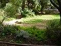 PikiWiki Israel 10614 technion ecological garden.jpg