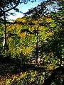 Pines And Shadows - panoramio.jpg