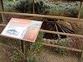 Pithouse in Anasazi Indian State Park DyeClan.com - panoramio.jpg