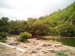 Polo Forest Area.jpg