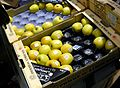 Pommes du Limousin AOP.jpg