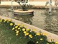 Pond inspiration.jpg