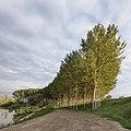 Poplars - San Benedetto Po, Mantua, Italy - October 4, 2019.jpg