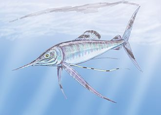Niobrara Formation - Protosphyraena perniciosa