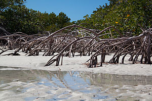 Providenciales - Image: Providenciales Mangrove Reflections