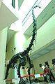 Pukyongosaurus.jpg