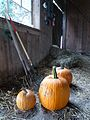 Pumpkins in the stall (3984997625).jpg