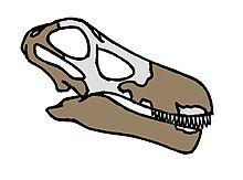 Quaesitosaurus skull.JPG