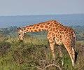 Queen Elizabeth Nat. Park, Uganda (17740086420).jpg