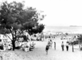 Queensland State Archives 1123 Beach scene and Coast Oak Trees Maroochydore December 1930.png